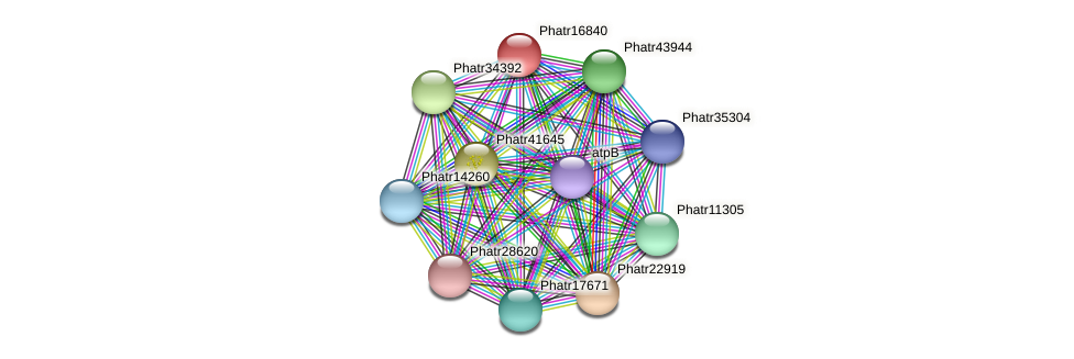 Phatr16840 protein (Phaeodactylum tricornutum) - STRING interaction network