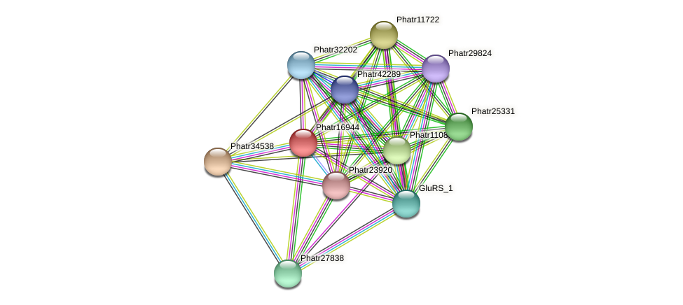 Phatr16944 protein (Phaeodactylum tricornutum) - STRING interaction network