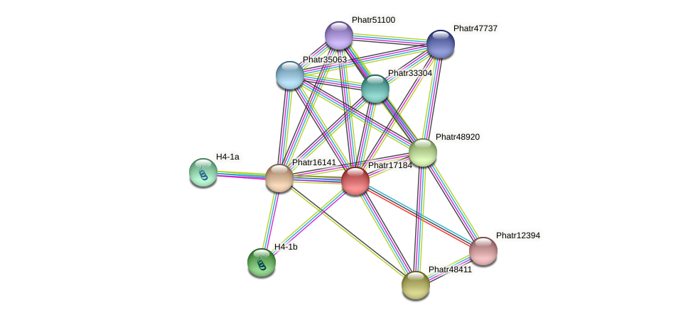 Phatr17184 protein (Phaeodactylum tricornutum) - STRING interaction network
