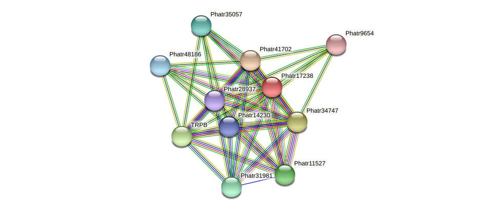 Phatr17238 protein (Phaeodactylum tricornutum) - STRING interaction network