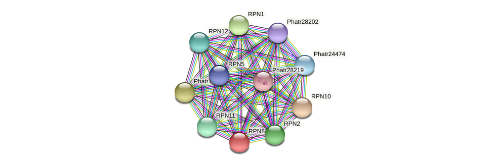 RPN8 protein (Phaeodactylum tricornutum) - STRING interaction network