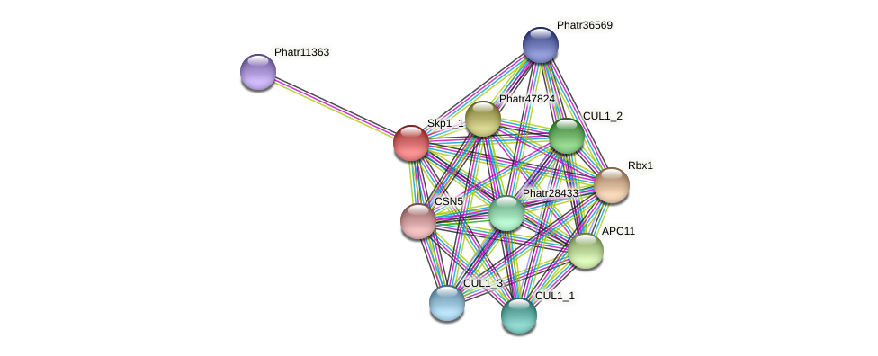 Skp1_1 protein (Phaeodactylum tricornutum) - STRING interaction network