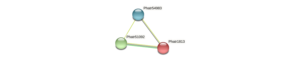 Phatr1813 protein (Phaeodactylum tricornutum) - STRING interaction network