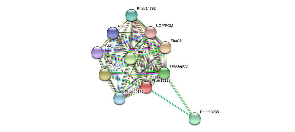 Phatr18228 protein (Phaeodactylum tricornutum) - STRING interaction network