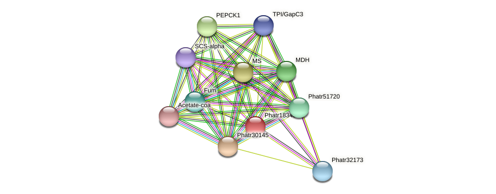 Phatr18345 protein (Phaeodactylum tricornutum) - STRING interaction network
