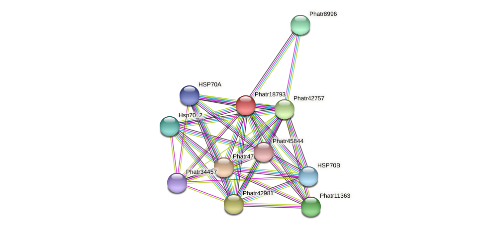 Phatr18793 protein (Phaeodactylum tricornutum) - STRING interaction network