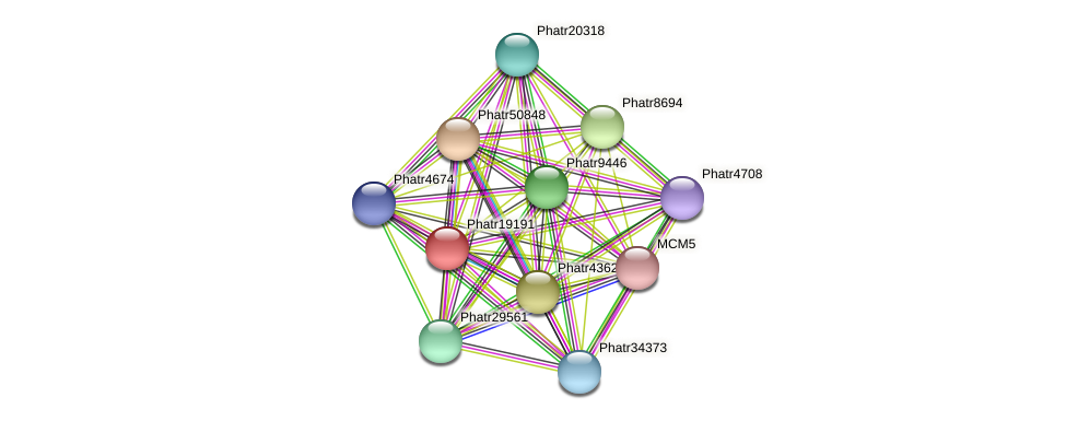 Phatr19191 protein (Phaeodactylum tricornutum) - STRING interaction network