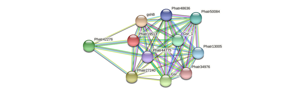 Phatr19513 protein (Phaeodactylum tricornutum) - STRING interaction network