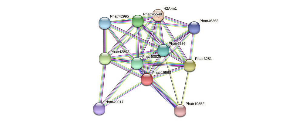 Phatr19568 protein (Phaeodactylum tricornutum) - STRING interaction network