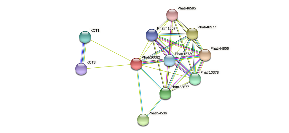 Phatr20082 protein (Phaeodactylum tricornutum) - STRING interaction network