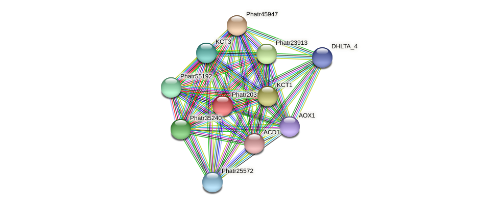 Phatr20310 protein (Phaeodactylum tricornutum) - STRING interaction network