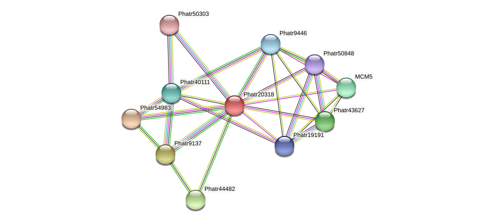 Phatr20318 protein (Phaeodactylum tricornutum) - STRING interaction network
