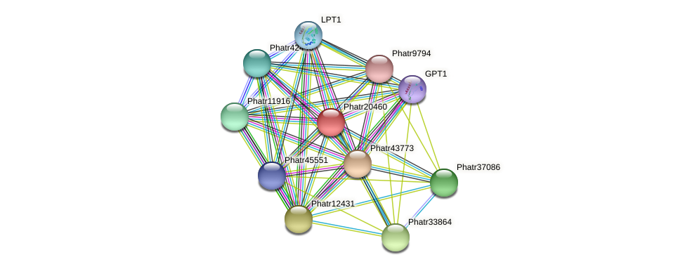 Phatr20460 protein (Phaeodactylum tricornutum) - STRING interaction network