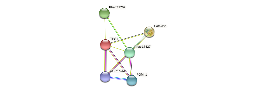 Phatr20504 protein (Phaeodactylum tricornutum) - STRING interaction network