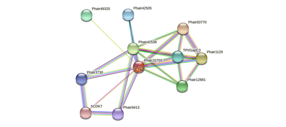 Phatr20755 protein (Phaeodactylum tricornutum) - STRING interaction network
