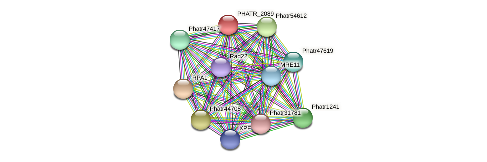 PHATR_2089 protein (Phaeodactylum tricornutum) - STRING interaction network