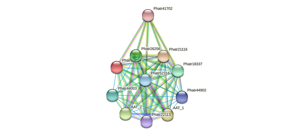 Phatr20905 protein (Phaeodactylum tricornutum) - STRING interaction network