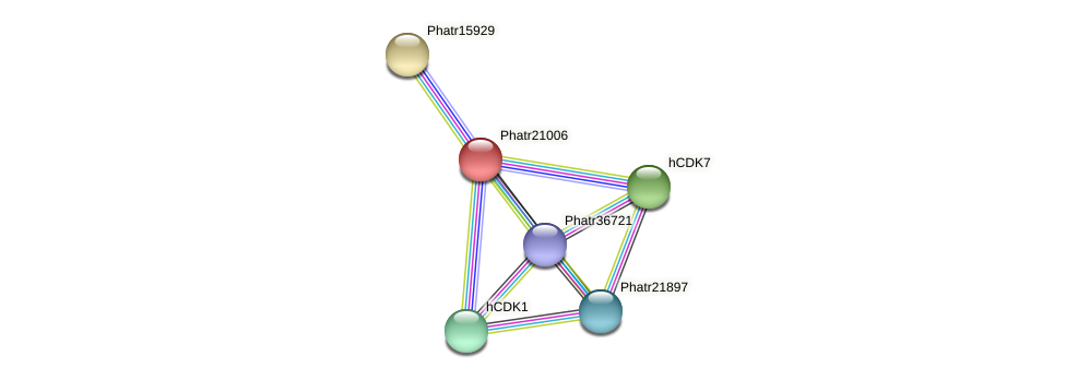 Phatr21006 protein (Phaeodactylum tricornutum) - STRING interaction network