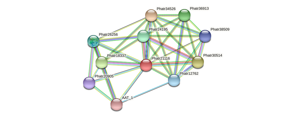 Phatr21116 protein (Phaeodactylum tricornutum) - STRING interaction network