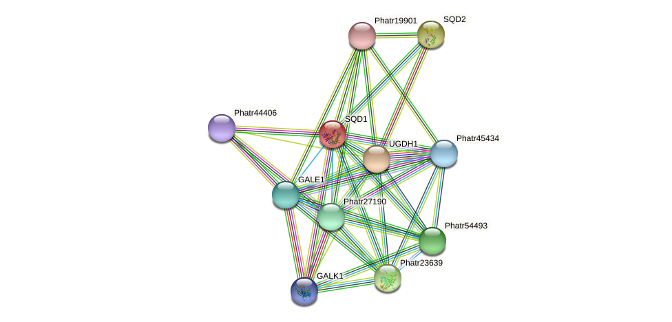SQD1 protein (Phaeodactylum tricornutum) - STRING interaction network
