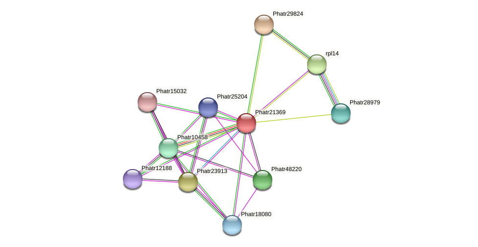 Phatr21369 protein (Phaeodactylum tricornutum) - STRING interaction network