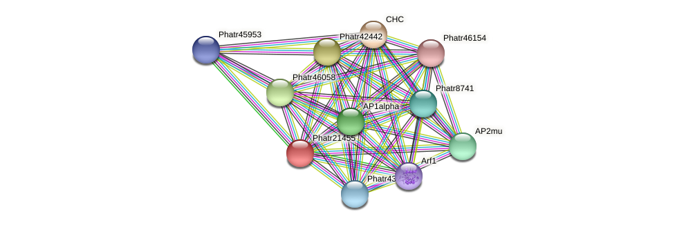 Phatr21455 protein (Phaeodactylum tricornutum) - STRING interaction network