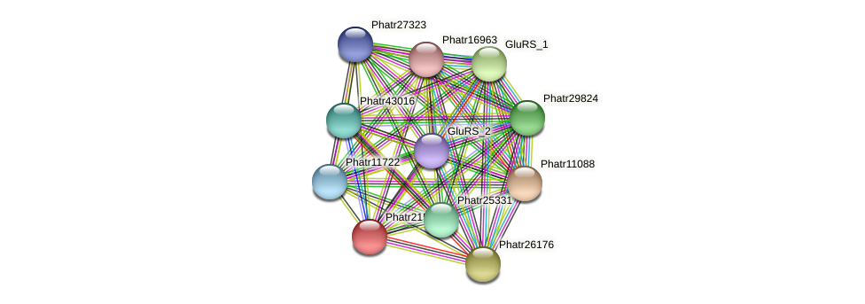 Phatr21513 protein (Phaeodactylum tricornutum) - STRING interaction network