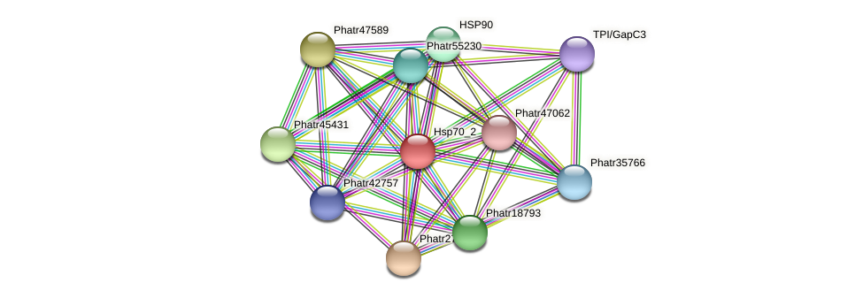 Hsp70_2 protein (Phaeodactylum tricornutum) - STRING interaction network