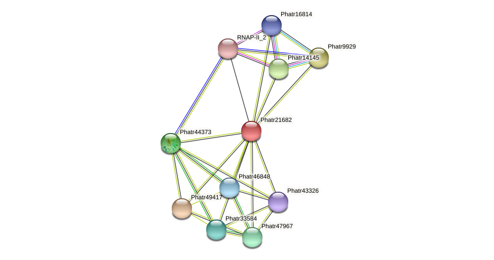 Phatr21682 protein (Phaeodactylum tricornutum) - STRING interaction network
