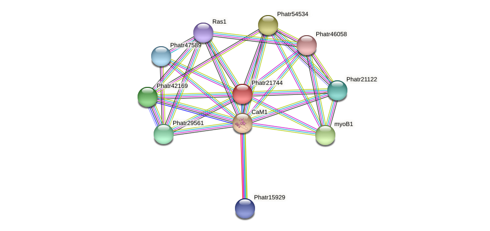 Phatr21744 protein (Phaeodactylum tricornutum) - STRING interaction network