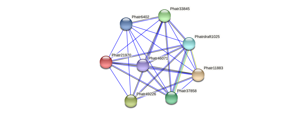 Phatr21970 protein (Phaeodactylum tricornutum) - STRING interaction network