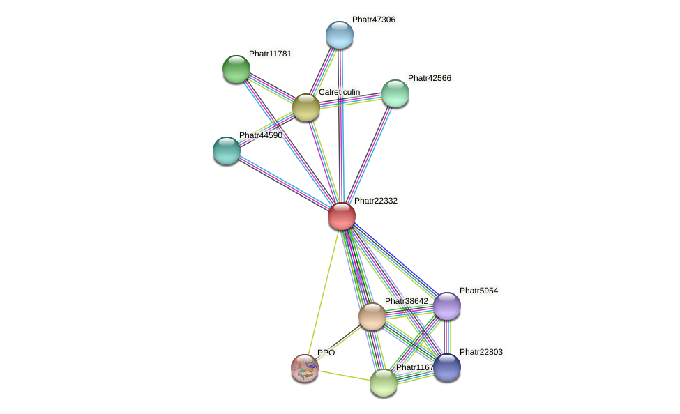 Phatr22332 protein (Phaeodactylum tricornutum) - STRING interaction network