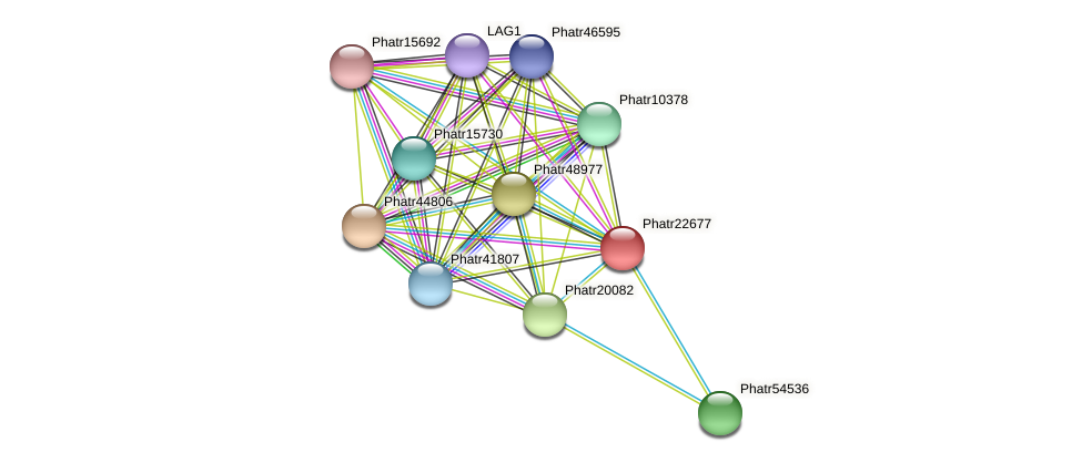 Phatr22677 protein (Phaeodactylum tricornutum) - STRING interaction network
