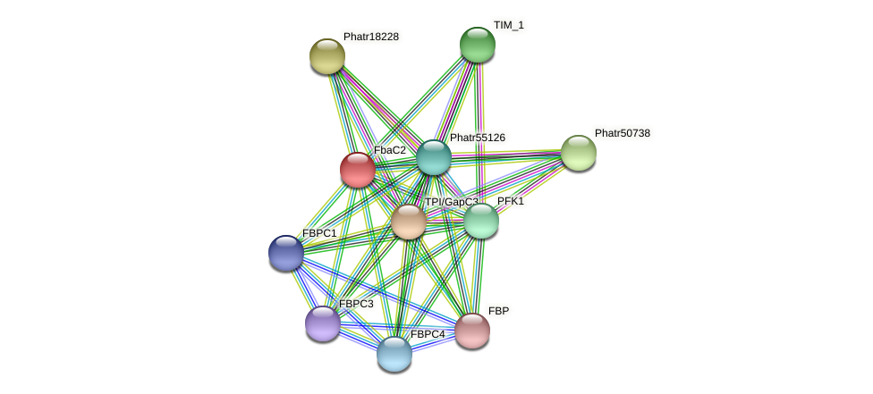 FbaC2 protein (Phaeodactylum tricornutum) - STRING interaction network