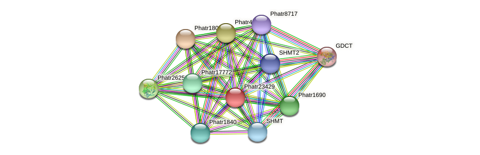 Phatr23429 protein (Phaeodactylum tricornutum) - STRING interaction network