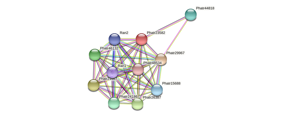 Phatr23582 protein (Phaeodactylum tricornutum) - STRING interaction network