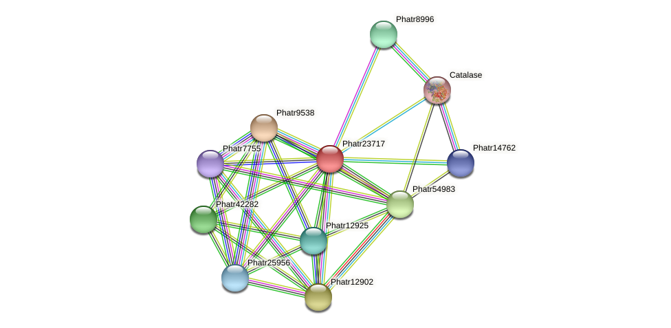 Phatr23717 protein (Phaeodactylum tricornutum) - STRING interaction network