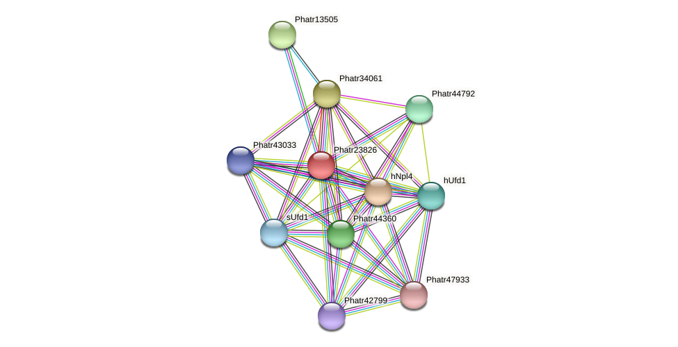 Phatr23826 protein (Phaeodactylum tricornutum) - STRING interaction network