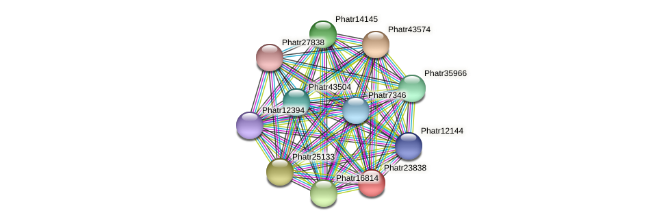 Phatr23838 protein (Phaeodactylum tricornutum) - STRING interaction network