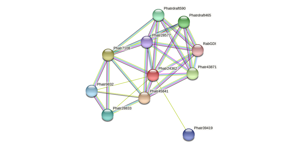 Phatr24362 protein (Phaeodactylum tricornutum) - STRING interaction network