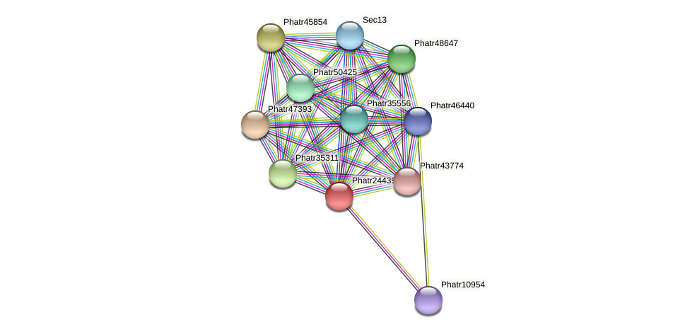 Phatr24439 protein (Phaeodactylum tricornutum) - STRING interaction network