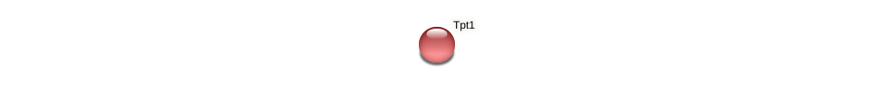 Tpt1 protein (Phaeodactylum tricornutum) - STRING interaction network