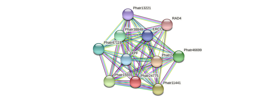 Phatr24775 protein (Phaeodactylum tricornutum) - STRING interaction network