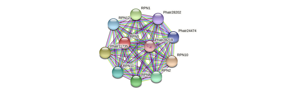 RPN5 protein (Phaeodactylum tricornutum) - STRING interaction network