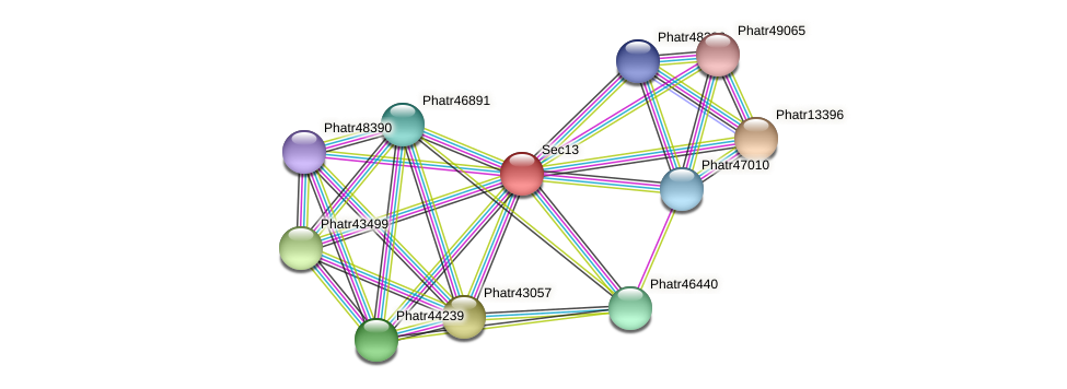 Sec13 protein (Phaeodactylum tricornutum) - STRING interaction network