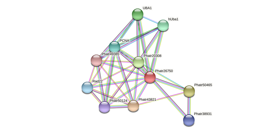 Phatr26750 protein (Phaeodactylum tricornutum) - STRING interaction network
