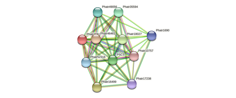 Phatr26813 protein (Phaeodactylum tricornutum) - STRING interaction network