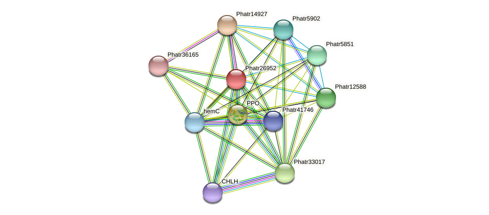 Phatr26952 protein (Phaeodactylum tricornutum) - STRING interaction network