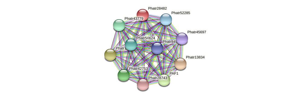 Phatr28482 protein (Phaeodactylum tricornutum) - STRING interaction network