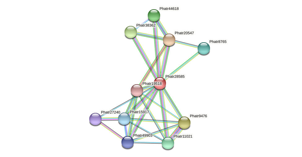 Phatr28585 protein (Phaeodactylum tricornutum) - STRING interaction network